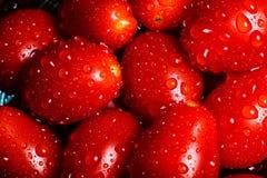 Eine klare und vibrierende Zusammenstellung von Cherry Tomatoes in einem Makrosh lizenzfreies stockfoto