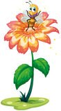 Eine kleine Biene über der riesigen Blume Stockfotos