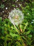 Eine kleine Blume, die allein an einem Gartenfeld steht Stockbild