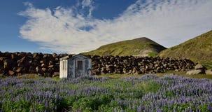 Eine kleine Bretterbude in der isländischen Landschaft, mit Lupinen in der Front Halbinsel Skagi stockfotografie