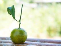 Eine kleine grüne Orange Lizenzfreie Stockfotos