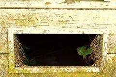 Eine kleine Grünpflanze versucht, von einer zerbrochenen Fensterscheibe zu überleben Lizenzfreie Stockfotografie