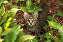 Eine kleine Katze Stockbild