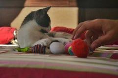 Eine kleine Katze bereit zu spielen lizenzfreie stockfotografie