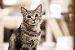 Eine kleine Katze der getigerten Katze lizenzfreie stockfotos