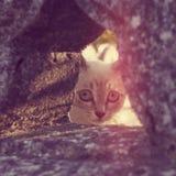 Eine kleine Katze, die aus einem Loch heraus späht Lizenzfreies Stockbild