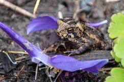 Eine kleine Kröte in einem Garten lizenzfreies stockfoto