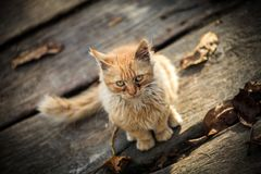 Eine kleine ländliche Katze Stockbilder