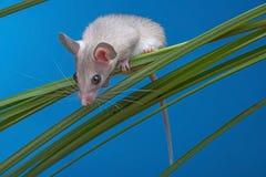 Eine kleine Maus Lizenzfreie Stockfotografie
