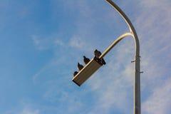 Eine kleine Menge von den Tauben, die auf Laternen sitzen lizenzfreies stockbild