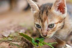 Eine kleine orange Katze Stockbild