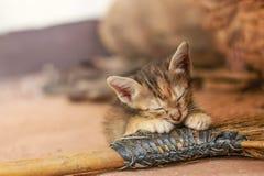 Eine kleine orange Katze Lizenzfreies Stockfoto