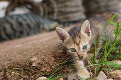 Eine kleine orange Katze, die glücklich spielt Stockbild