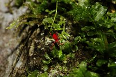 Eine kleine rote Spinne geht auf einen Felsen Lizenzfreie Stockbilder