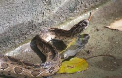 Eine kleine Schlange in den konkreten Teichen stockfotografie
