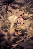 Eine kleine Schleppangel, spielend in meinem Garten Lizenzfreie Stockfotos