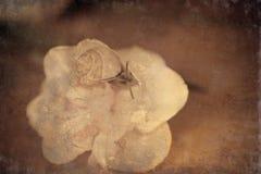 Eine kleine Schnecke, die um gelbe Narzissen wandert stockfotos