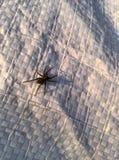 Eine kleine Spinne Stockfoto