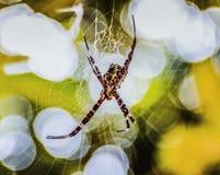Eine kleine Spinne Stockfotos