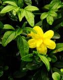 Eine kleine Sternblume Lizenzfreie Stockfotos
