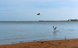 Eine kleine Welle des Meeres, die baltischen Meereswellen, Meerblick Stockfotos