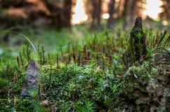 Eine kleine Welt in einem großen Wald stockbilder