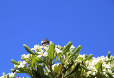 Eine kleine Wespe Stockbild