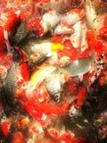 Eine koi Fischfamilie Lizenzfreies Stockbild