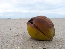 Eine Kokosnuss auf dem Strand Lizenzfreie Stockbilder