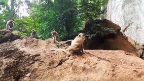 Eine Kolonie von Affen im Naturwald stockfoto