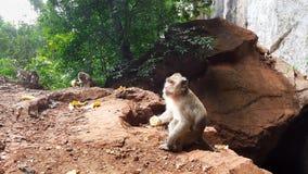 Eine Kolonie von Affen im Naturwald stockfotos