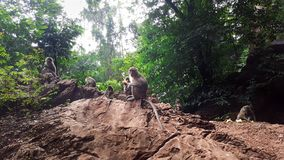 Eine Kolonie von Affen im Naturwald stockbilder