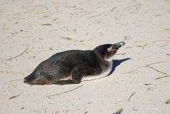 Eine Kolonie von afrikanischen Esel-Pinguinen Stockbild
