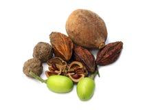 Eine Kombination von Kräuterfrüchten Lizenzfreies Stockfoto