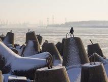 Eine Krähe auf dem Hintergrund der Ostsee und dem Hafen von Klaipeda in Litauen an einem sonnigen Wintertag lizenzfreie stockfotos