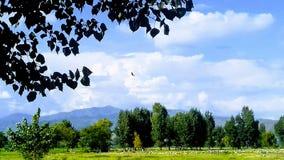 Eine Krähe, die über Bäume fliegt Lizenzfreie Stockfotografie