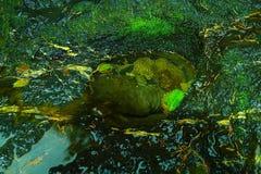 Eine Kräuselung in einer klaren Pfütze stockfotos