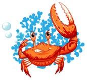 Eine Krabbe Lizenzfreies Stockfoto