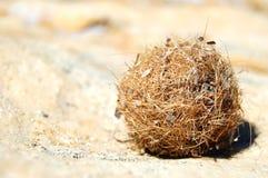 Eine Kugel der getrockneten Meerespflanze Lizenzfreies Stockbild