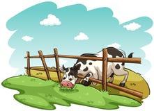Eine Kuh am Feld lizenzfreie abbildung