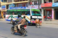 Eine Kuh, welche frei die Straße in Pokhara-Stadt, Nepal durchstreift Lizenzfreie Stockbilder