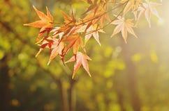Eine Landschaft des Herbstes Stockfotos