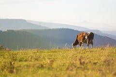Eine Landschaft mit einer Kuh Stockfotografie