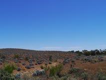 Eine Landschaft mit Perle Bleubüschen Lizenzfreies Stockbild