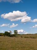 Eine Landschaft schoss Außenseite an einem klaren sonnigen Tag mit Schafen auf Stockfotos