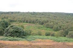 Eine Landschaft schoss von den Bäumen in den Derbyshire-Tälern Lizenzfreie Stockfotografie