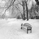 Eine leere Bank in einem Wald des verschneiten Winters Lizenzfreie Stockfotografie