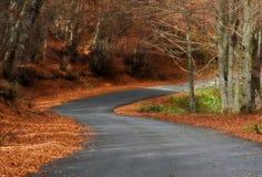 Eine leere Straße im Wald Stockfotos