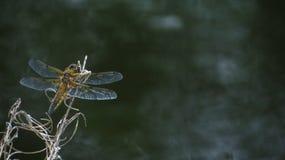 Eine Libelle auf dem Kanal in Irland Lizenzfreie Stockfotos
