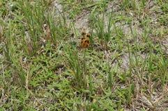 Eine Libelle in den gras Lizenzfreie Stockbilder